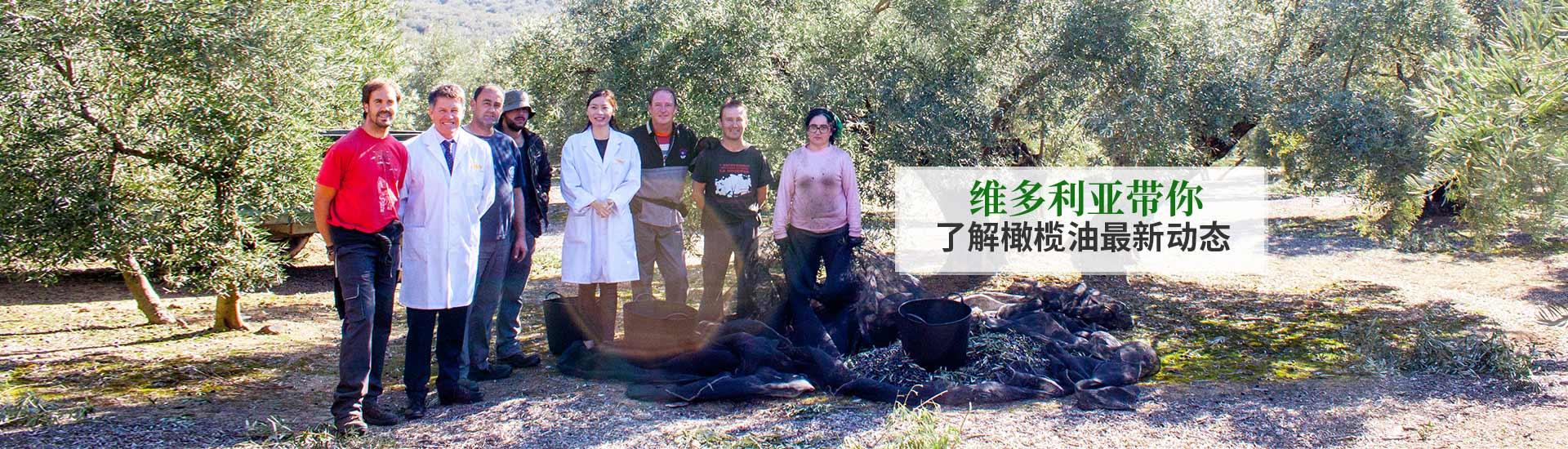 维多利亚带你  了解橄榄油最新动态