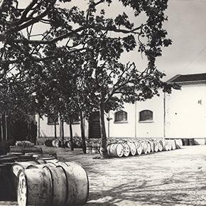 在西班牙从事橄榄油的生产与销售