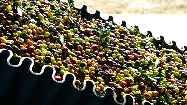 维多利亚西班牙庄园果实